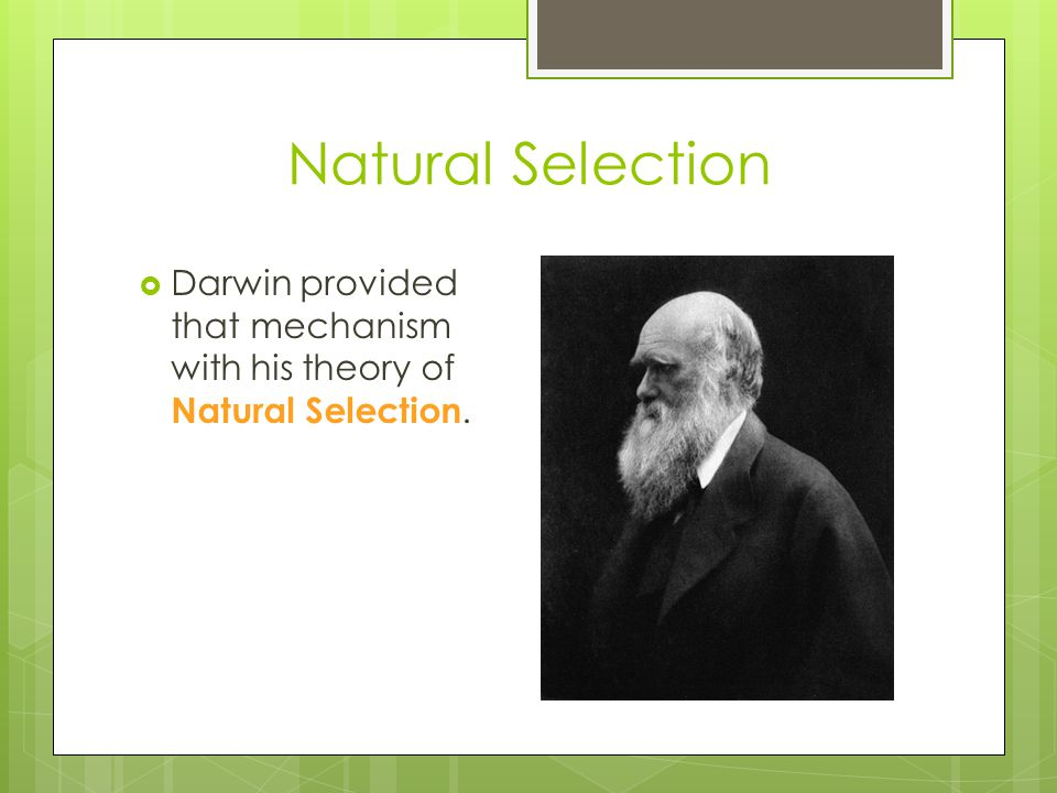 Natural Selection Darwin provided that mechanism with his theory of Natural Selection.