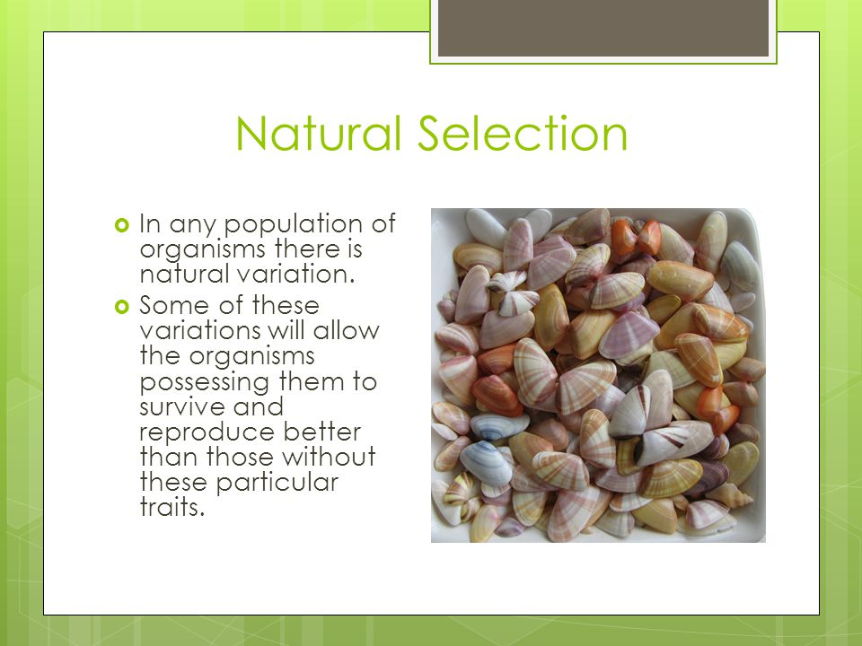 Natural Selection In any population of organisms there is natural variation.
