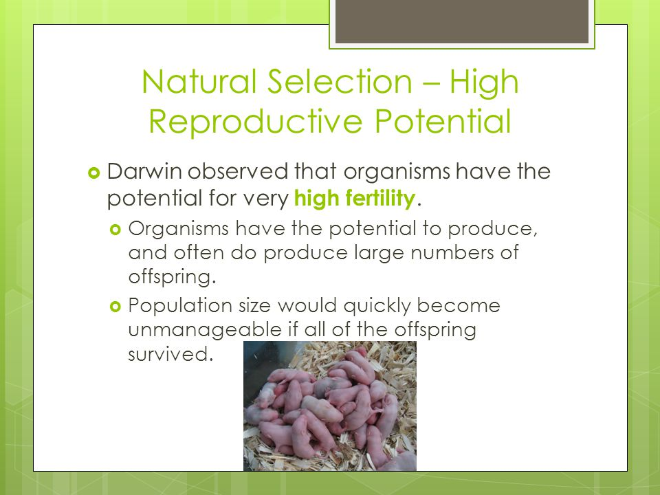 Natural Selection – High Reproductive Potential