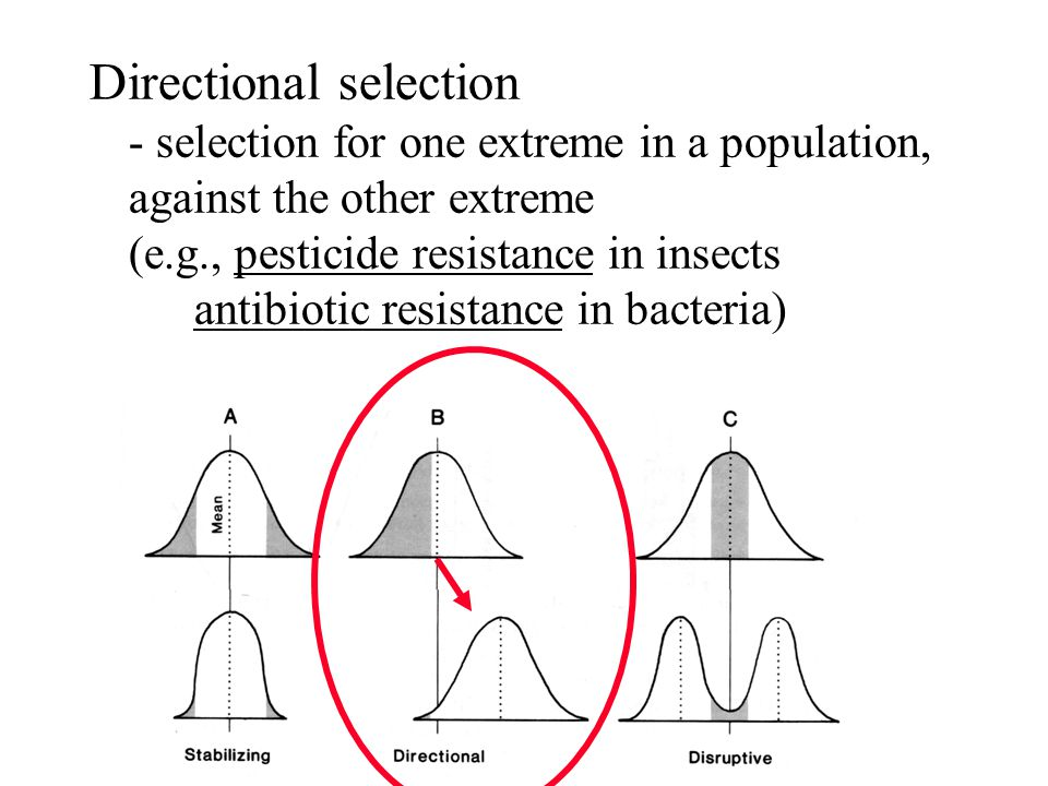 Directional selection - selection for one extreme in a population, against the other extreme (e.g., pesticide resistance in insects antibiotic resistance in bacteria)