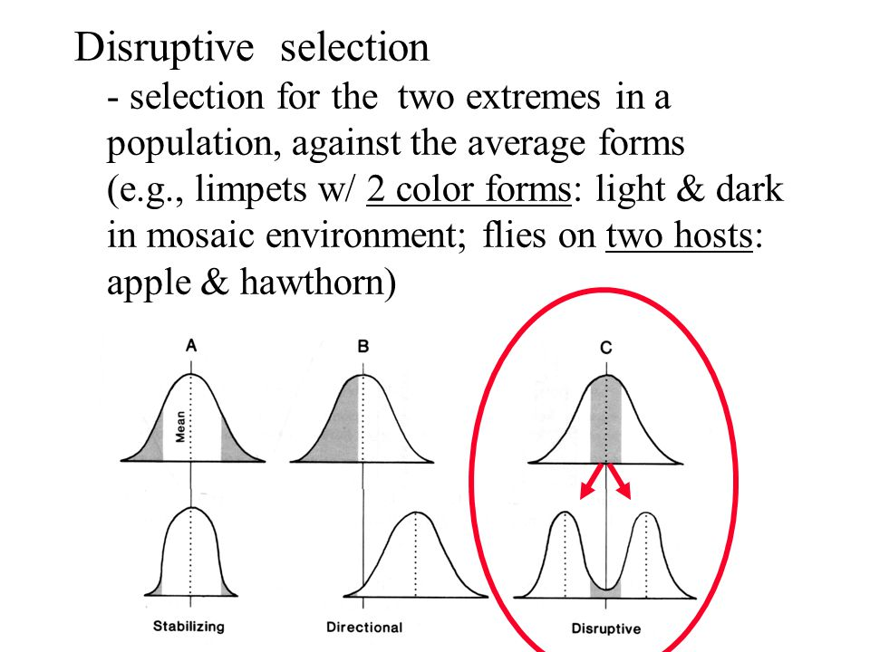 Disruptive selection - selection for the two extremes in a population, against the average forms (e.g., limpets w/ 2 color forms: light & dark in mosaic environment; flies on two hosts: apple & hawthorn)