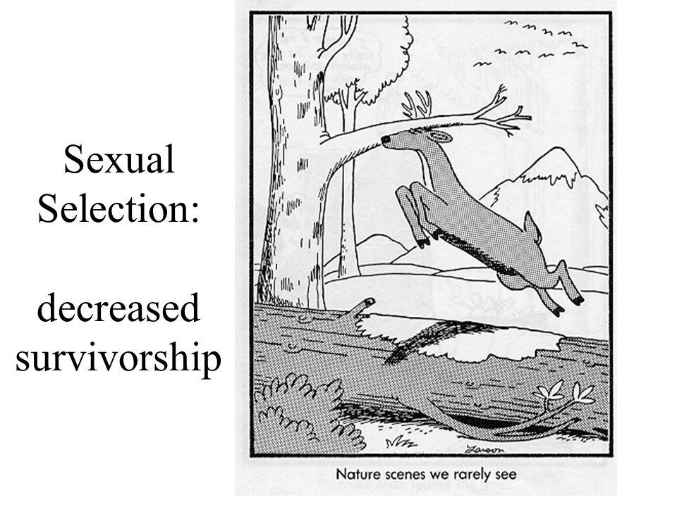 Sexual Selection: decreased survivorship