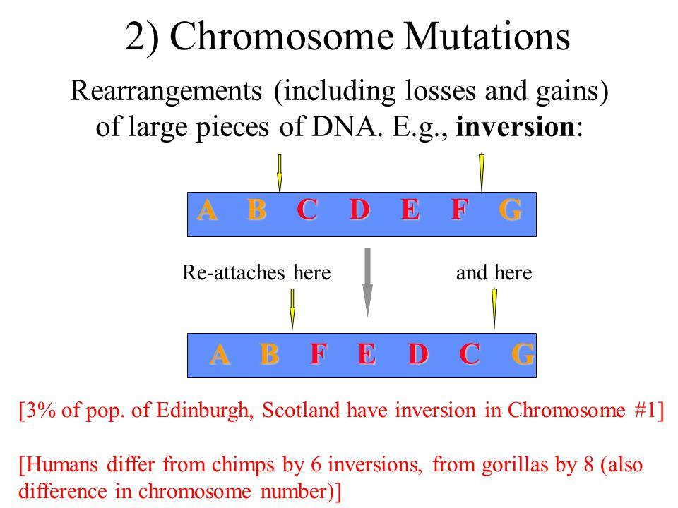 2) Chromosome Mutations