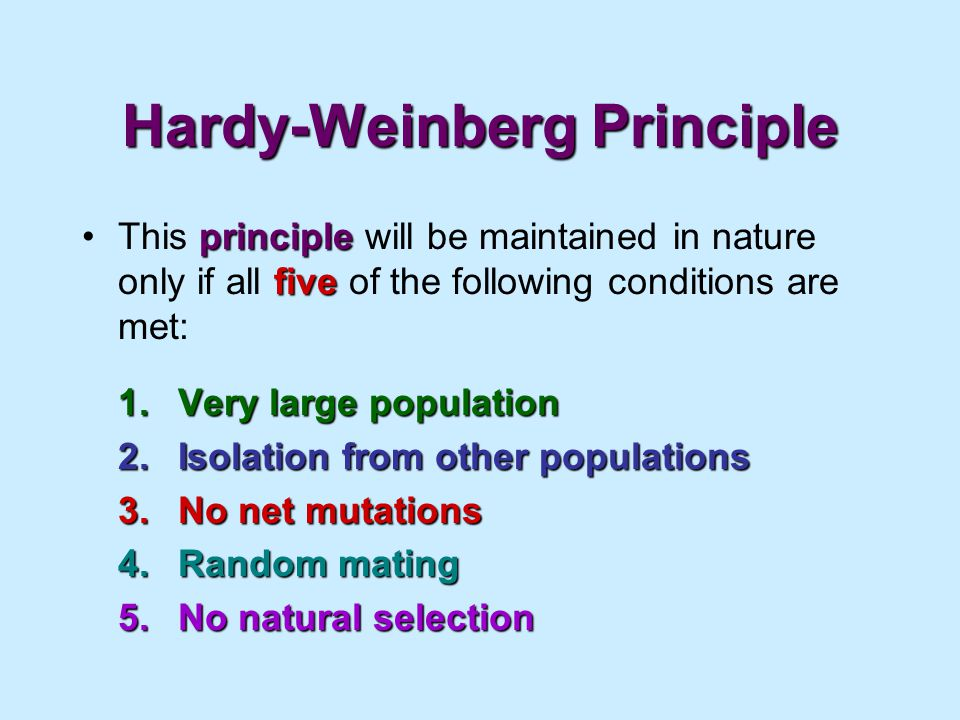 The Hardy-Weinberg Principle Simplified
