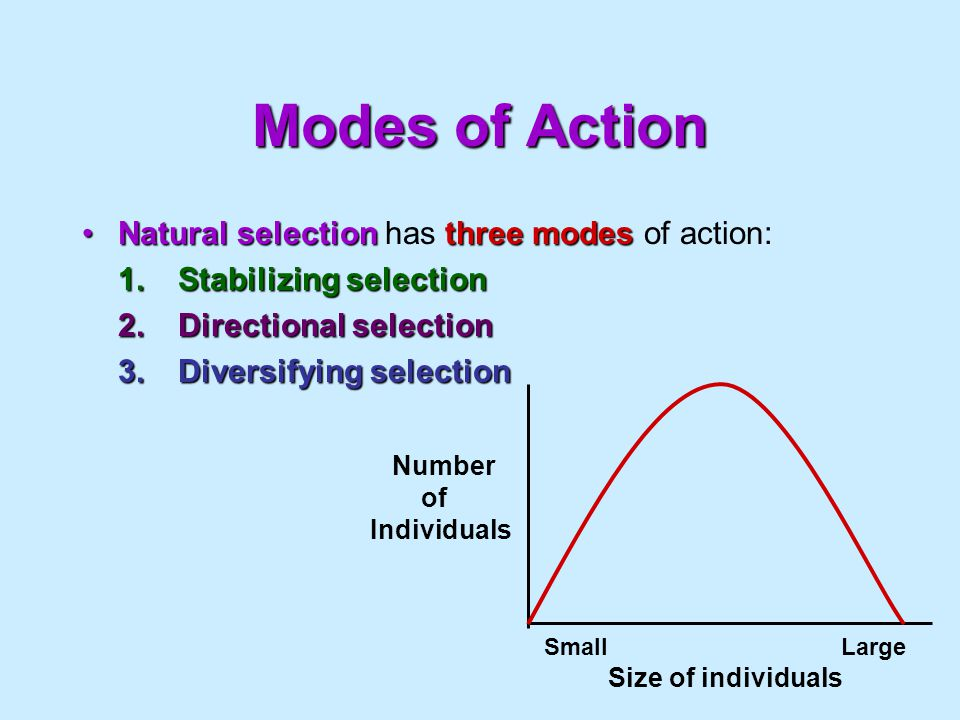 Modes of Action Natural selection has three modes of action: