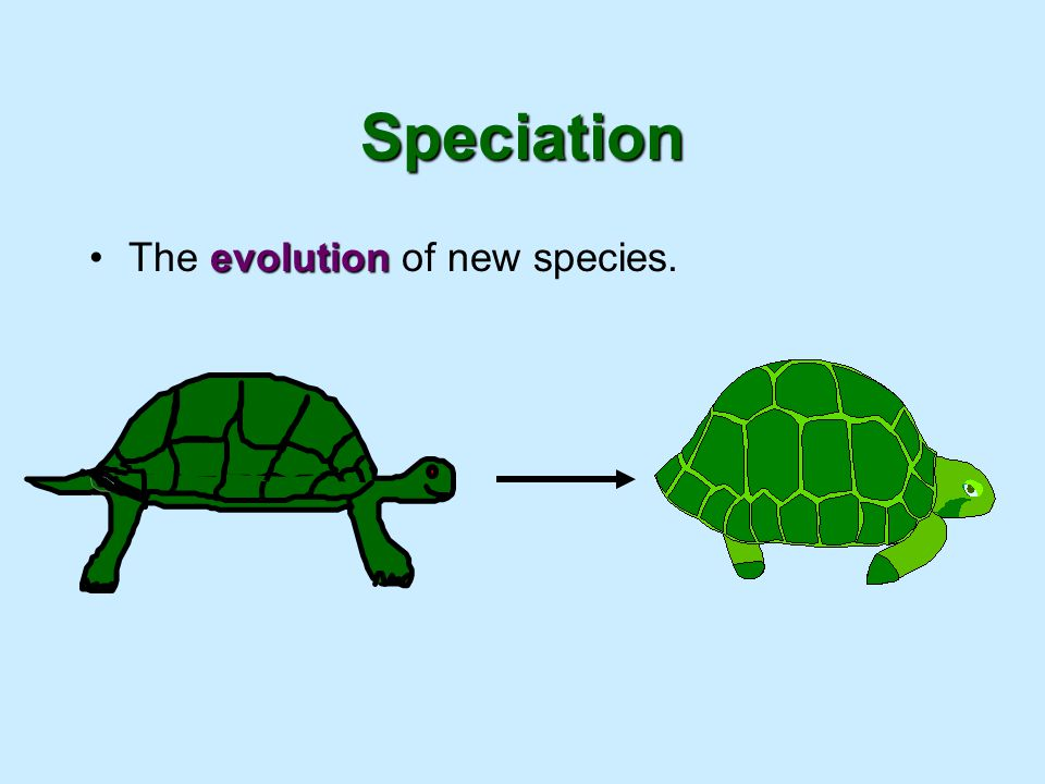 Speciation The evolution of new species.
