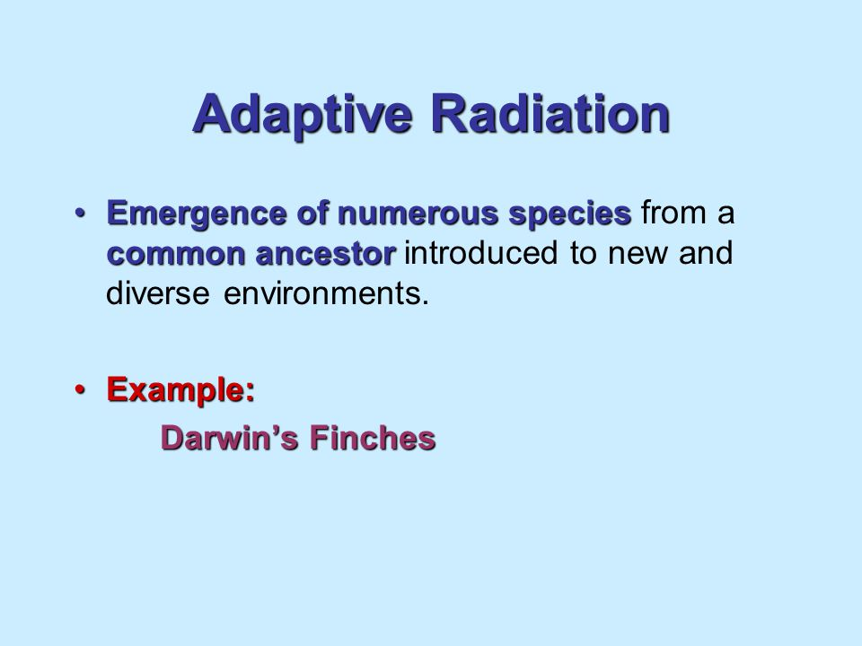Adaptive Radiation Emergence of numerous species from a common ancestor introduced to new and diverse environments.