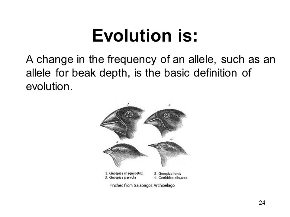 Evolution is: A change in the frequency of an allele, such as an allele for beak depth, is the basic definition of evolution.