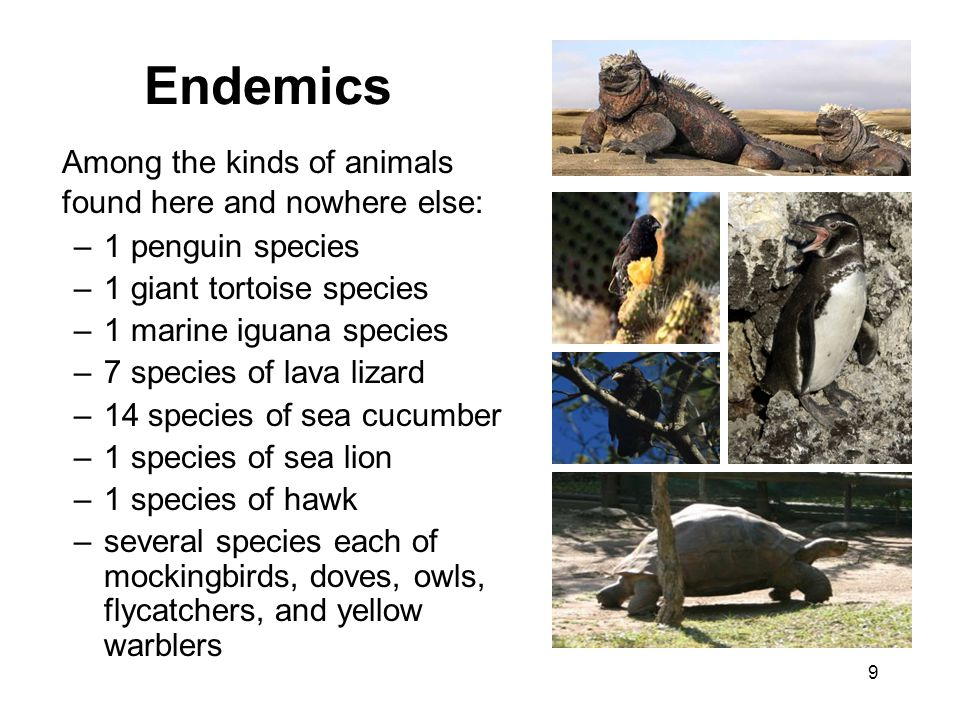 Endemics Among the kinds of animals found here and nowhere else: