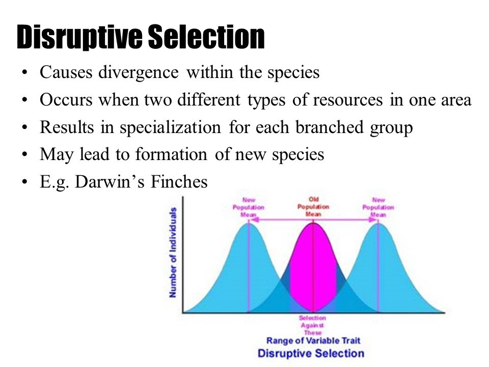 Disruptive Selection Causes divergence within the species