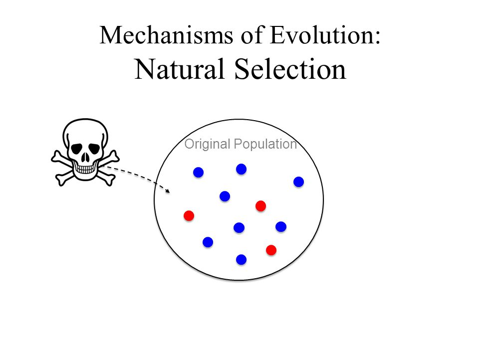 Mechanisms of Evolution: Natural Selection