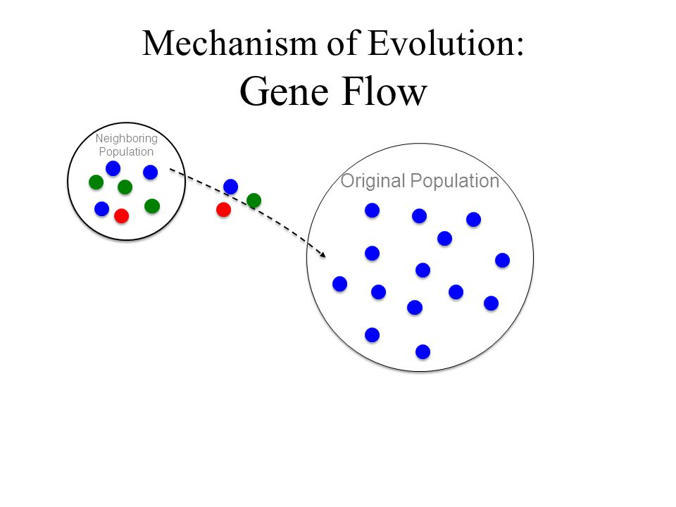 Mechanism of Evolution: Gene Flow