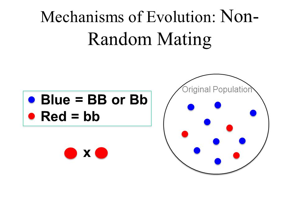 Mechanisms of Evolution: Non-Random Mating