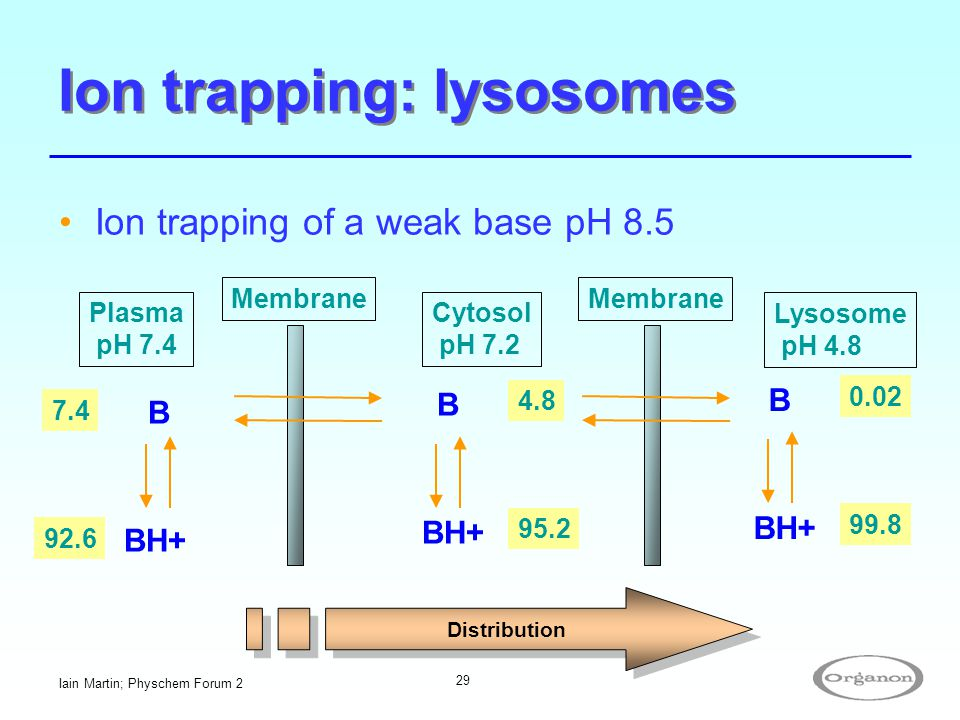 Ion trapping: lysosomes