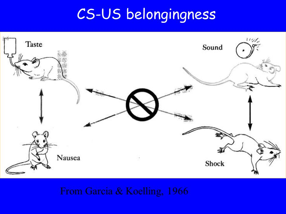 CS-US belongingness From Garcia & Koelling, 1966