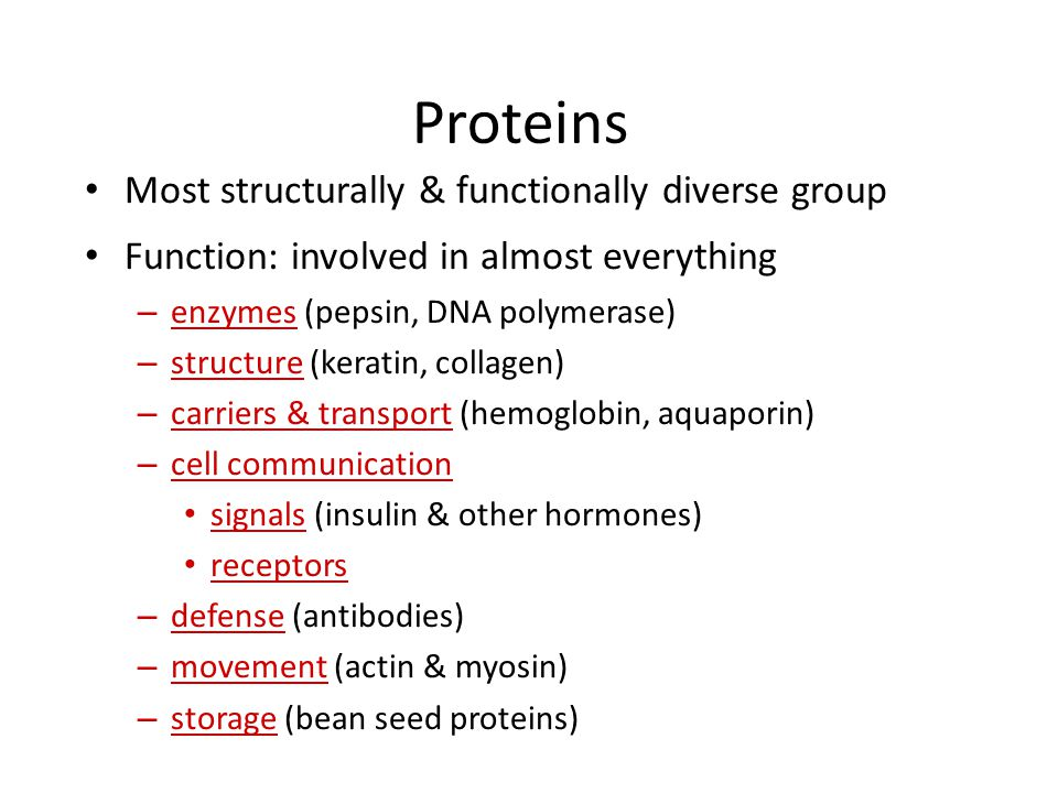 Proteins Most structurally & functionally diverse group