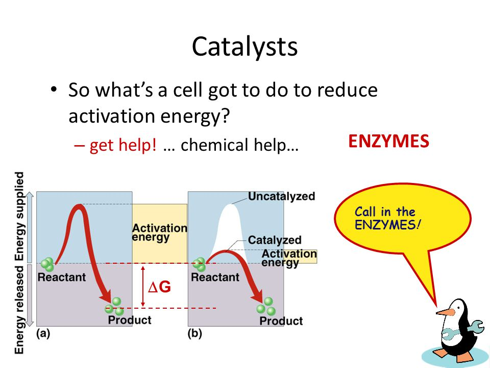 Catalysts So what's a cell got to do to reduce activation energy