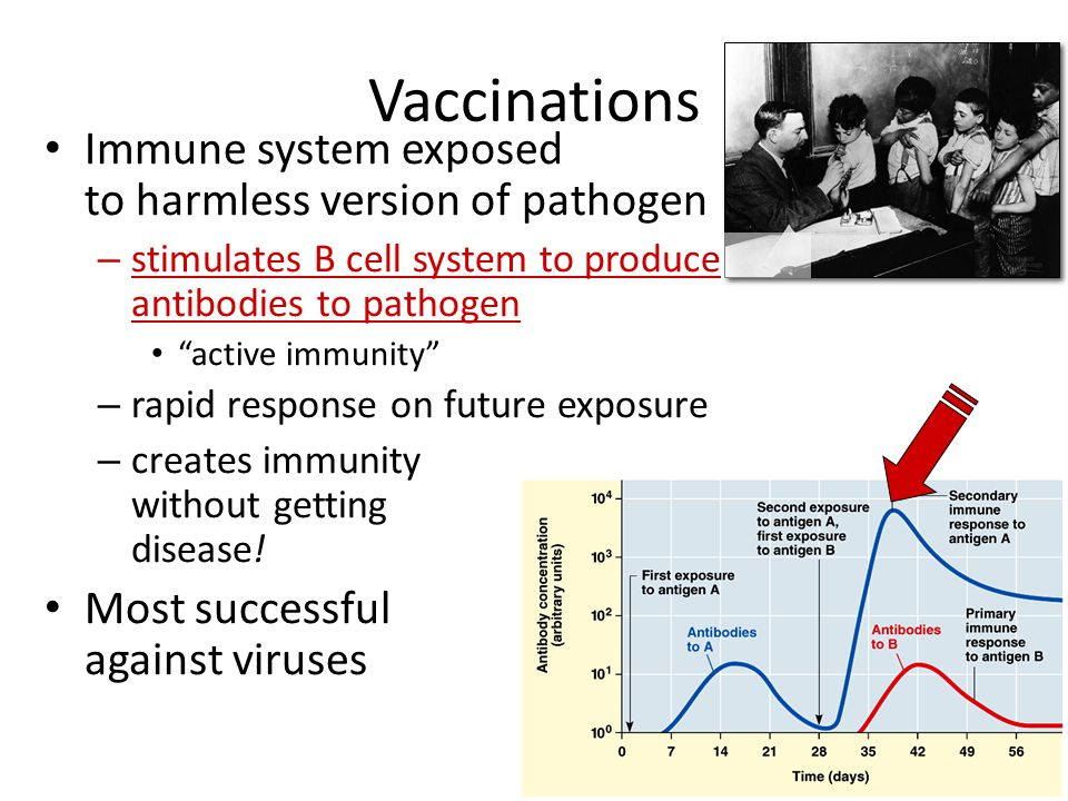 Vaccinations Immune system exposed to harmless version of pathogen