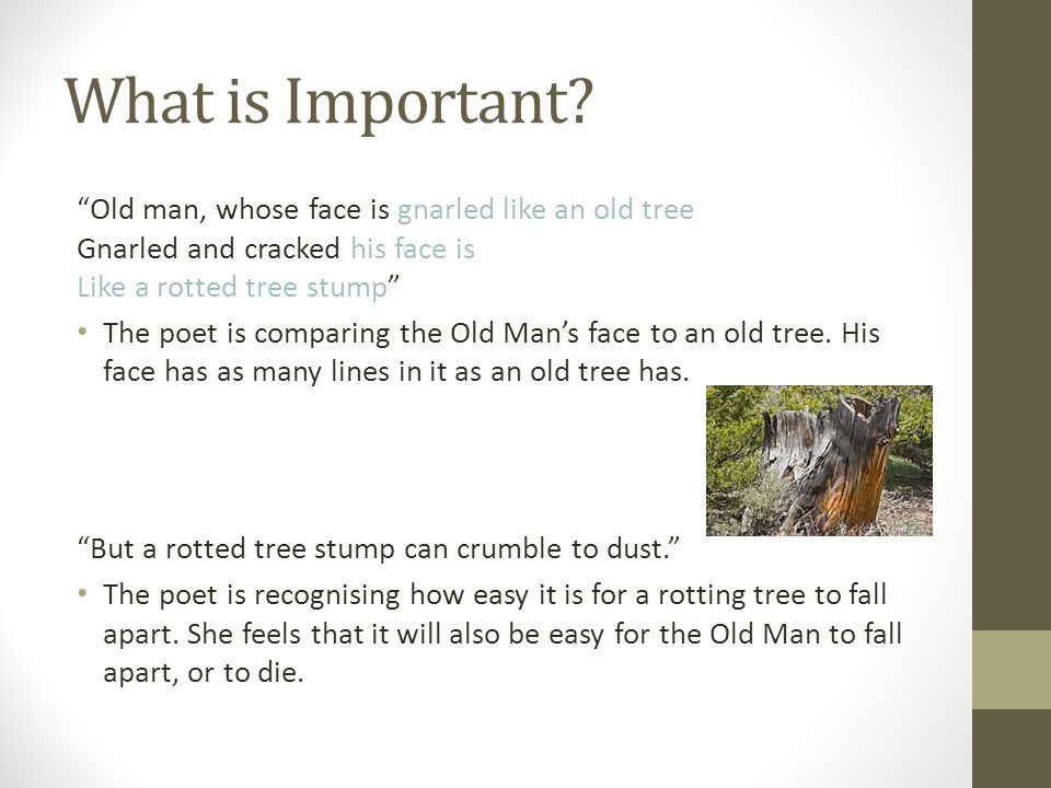 What is Important Old man, whose face is gnarled like an old tree Gnarled and cracked his face is Like a rotted tree stump