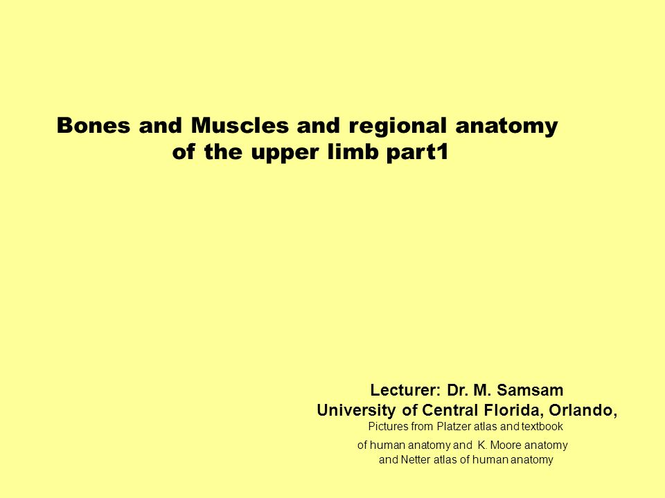 Bones and Muscles and regional anatomy of the upper limb part1