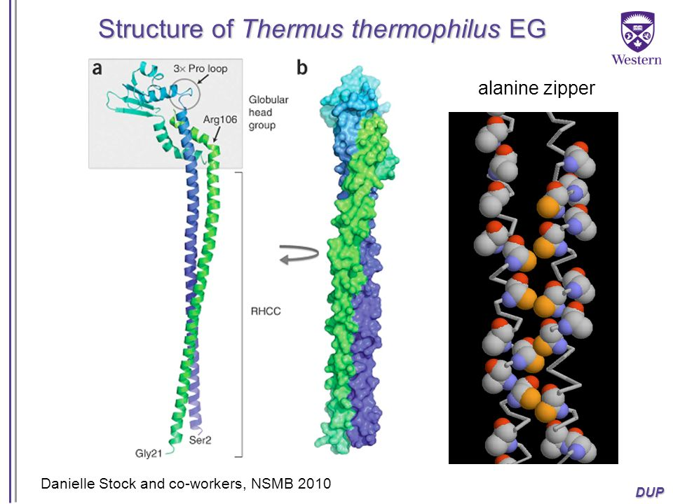 Structure of Thermus thermophilus EG