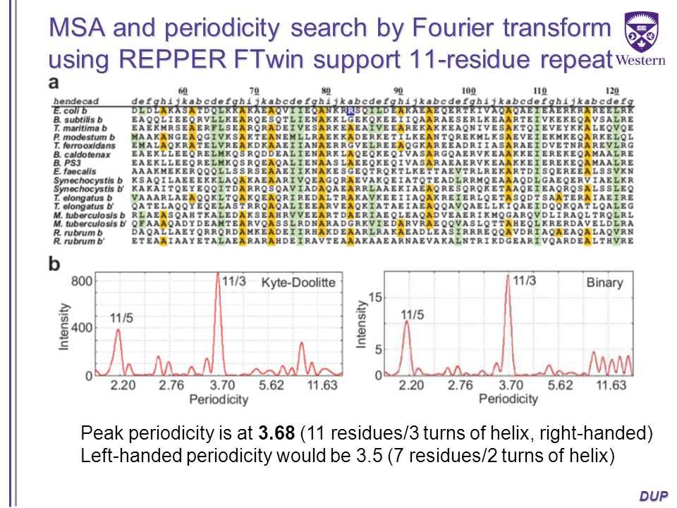 MSA and periodicity search by Fourier transform using REPPER FTwin support 11-residue repeat