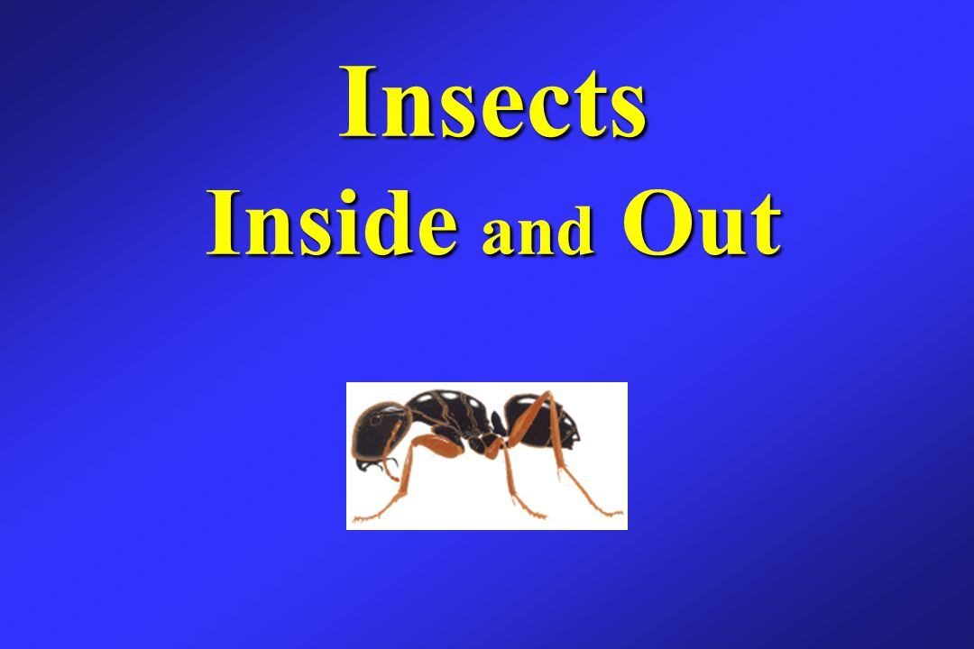 Insects Inside and Out