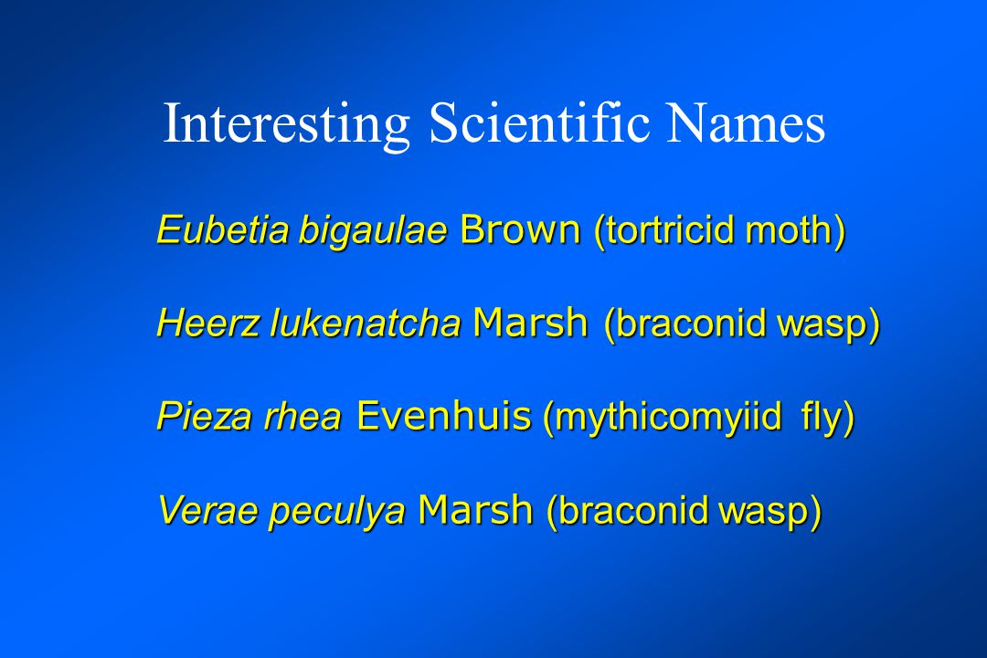 Interesting Scientific Names