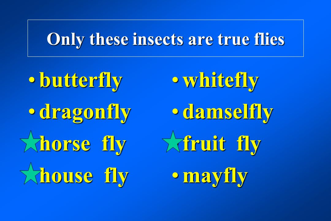 Only these insects are true flies
