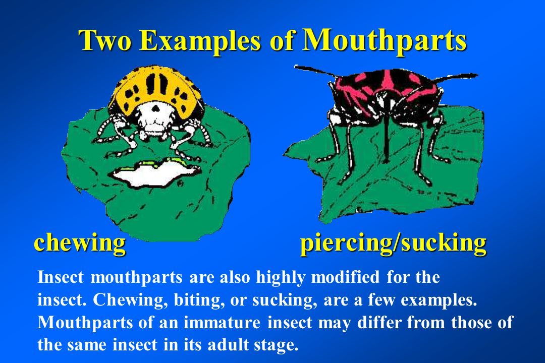 Two Examples of Mouthparts