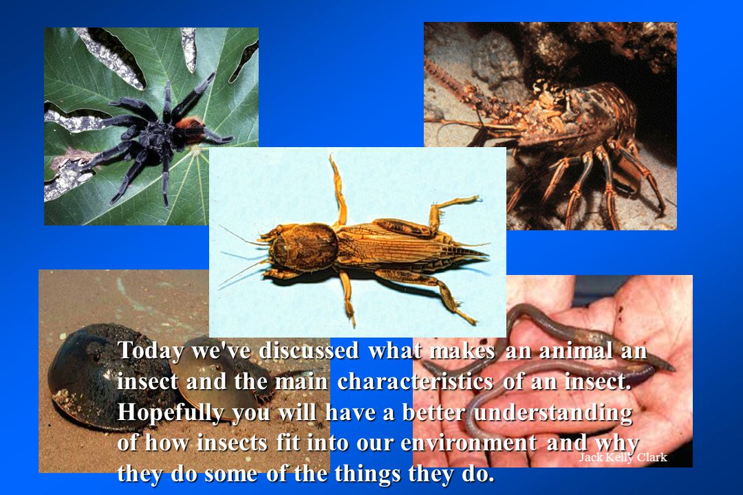 Today we ve discussed what makes an animal an insect and the main characteristics of an insect. Hopefully you will have a better understanding of how insects fit into our environment and why they do some of the things they do.