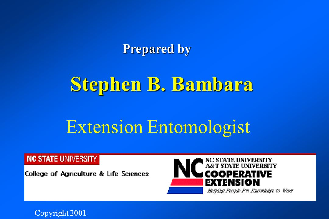 Stephen B. Bambara Extension Entomologist NC STATE UNIVERSITY
