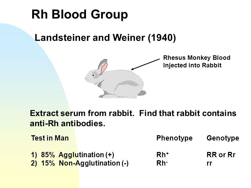 Rh Blood Group Landsteiner and Weiner (1940)
