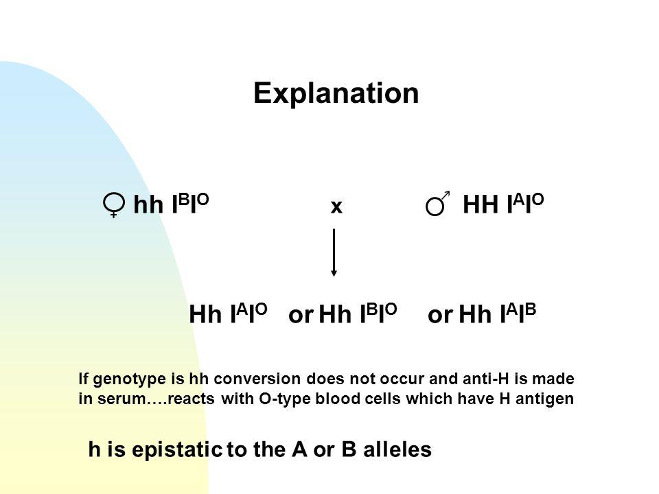 Explanation hh IBIO x HH IAIO Hh IAIO or Hh IBIO or Hh IAIB