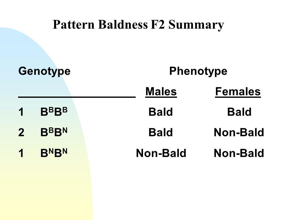 Pattern Baldness F2 Summary