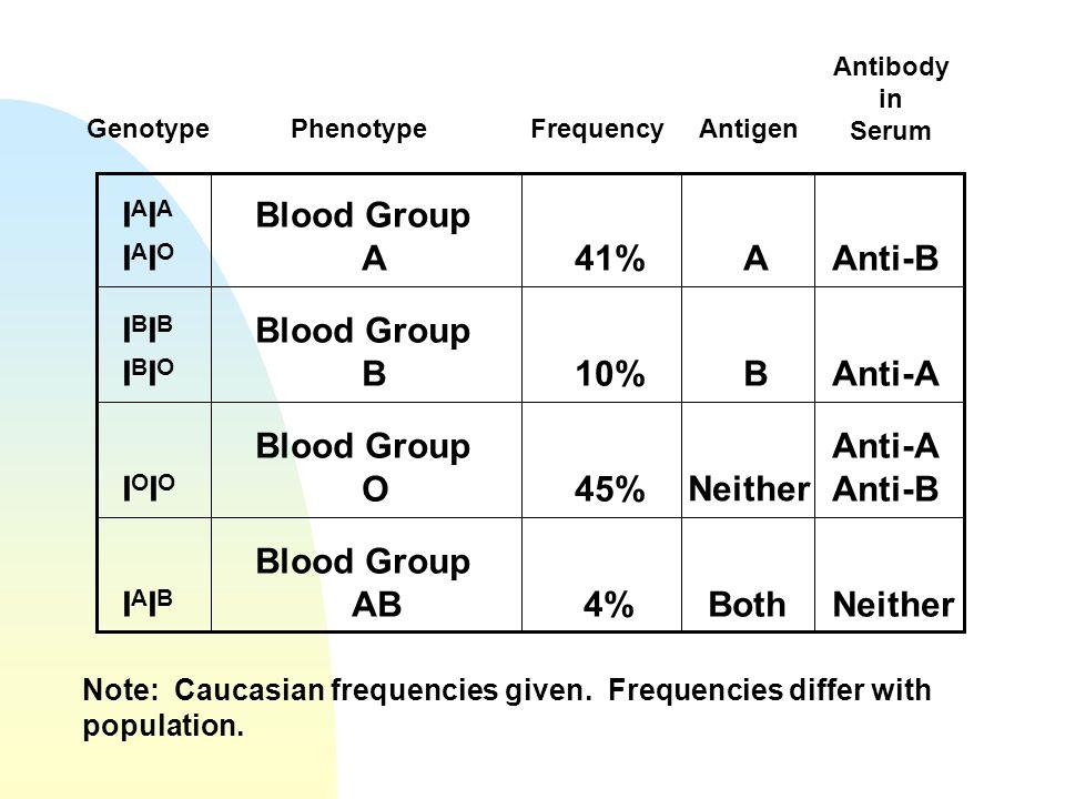 IAIA IAIO Blood Group A 41% A Anti-B IBIB IBIO Blood Group B 10% B