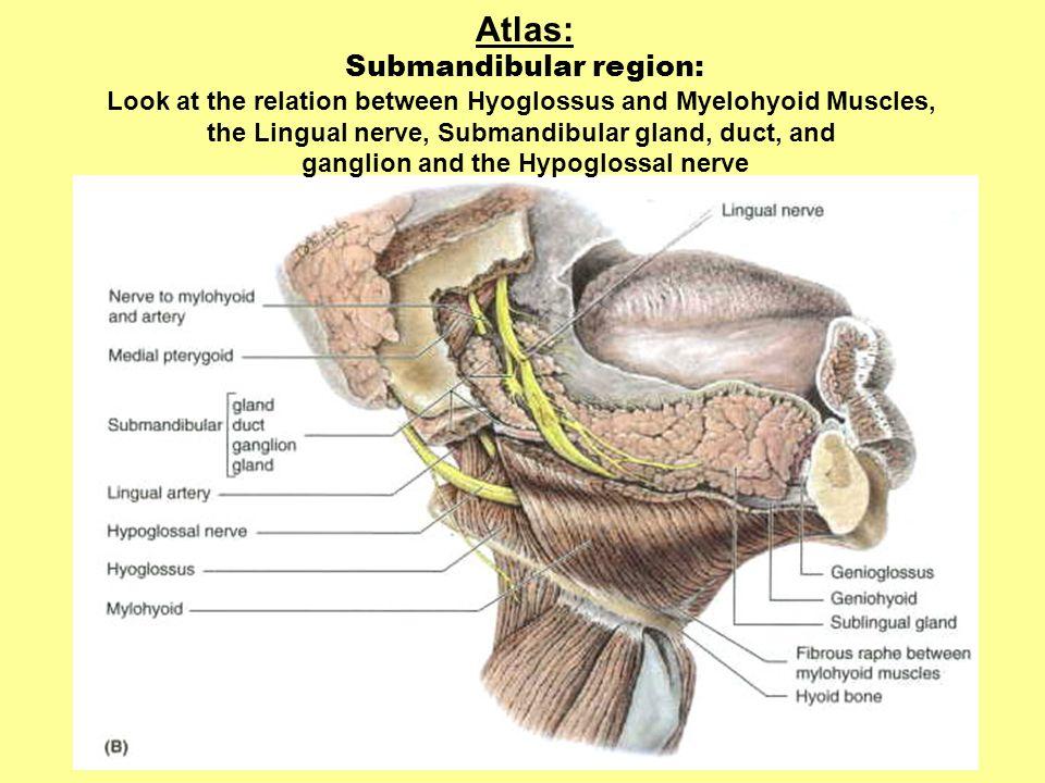 Atlas: Submandibular region: