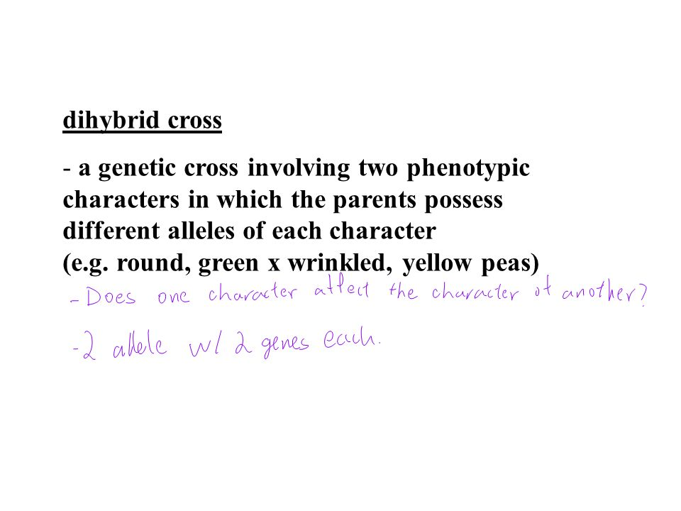 dihybrid cross a genetic cross involving two phenotypic. characters in which the parents possess. different alleles of each character.