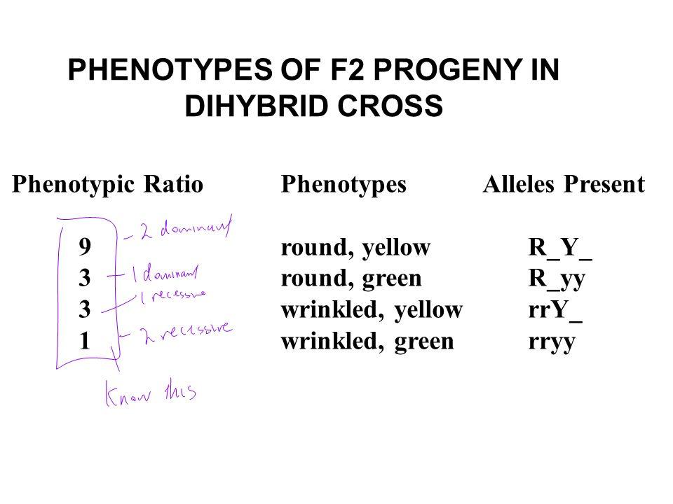 PHENOTYPES OF F2 PROGENY IN DIHYBRID CROSS