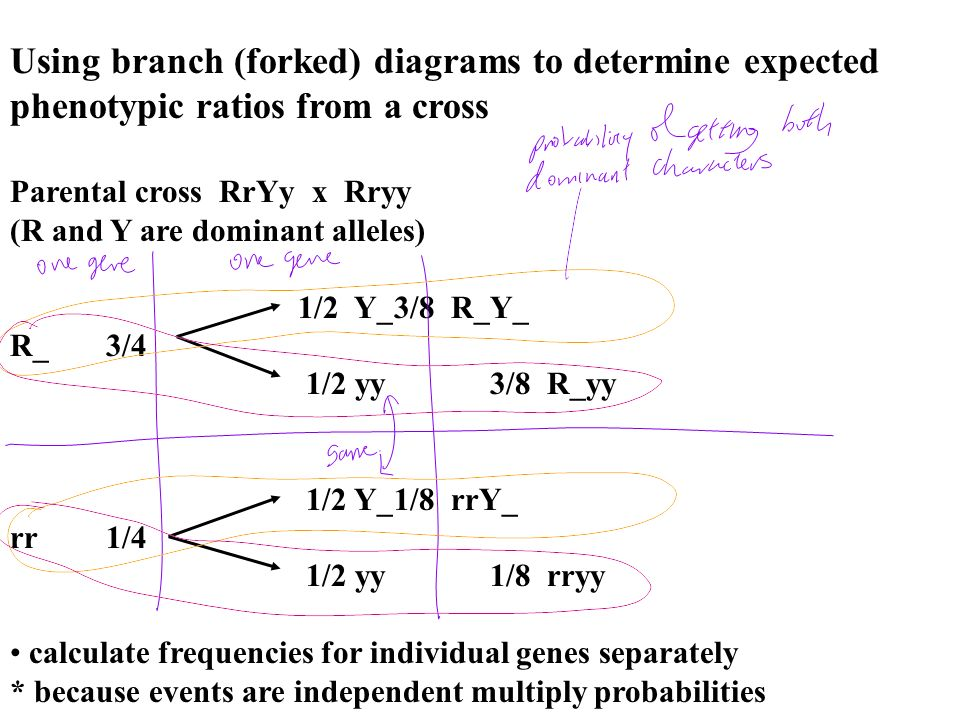 Using branch (forked) diagrams to determine expected