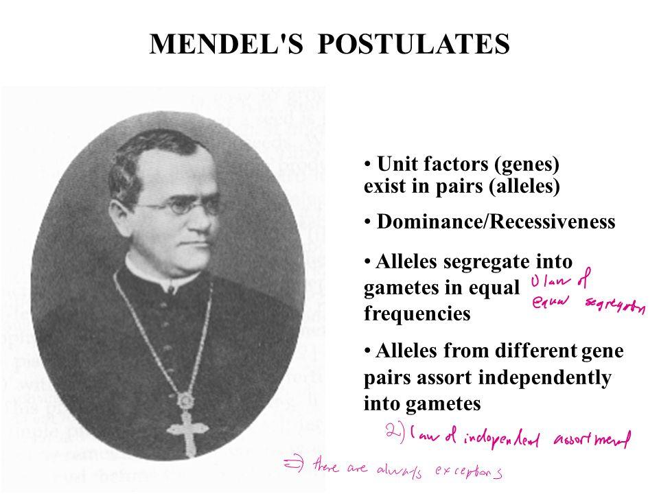 MENDEL S POSTULATES Unit factors (genes) exist in pairs (alleles)