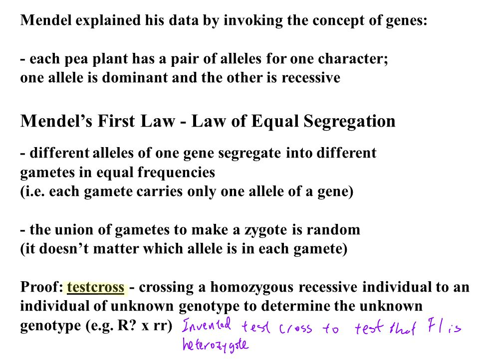 Mendel's First Law - Law of Equal Segregation