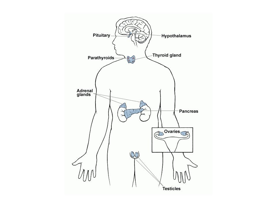 Classic endocrine systems