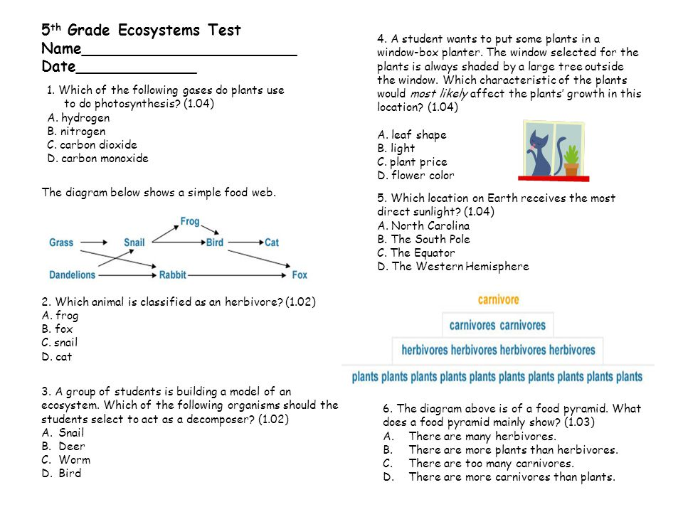 5th Grade Ecosystems Test Name_______________________