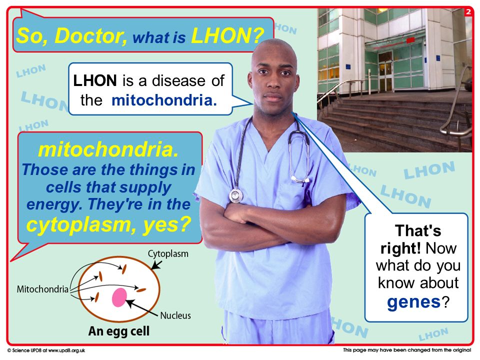 So, Doctor, what is LHON LHON is a disease of the mitochondria.