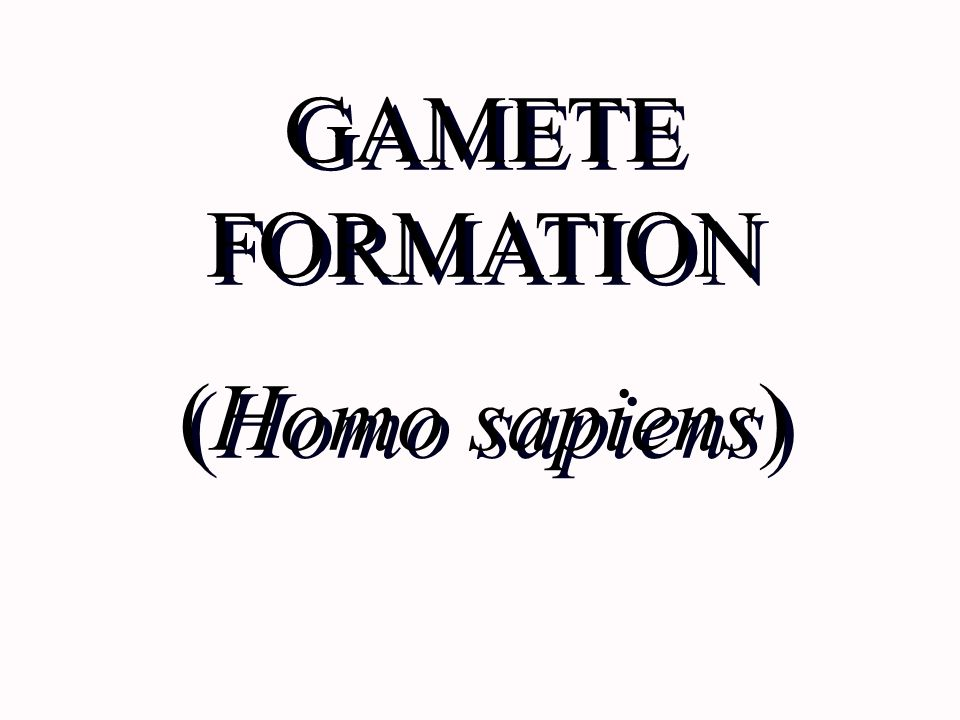 GAMETE FORMATION (Homo sapiens)