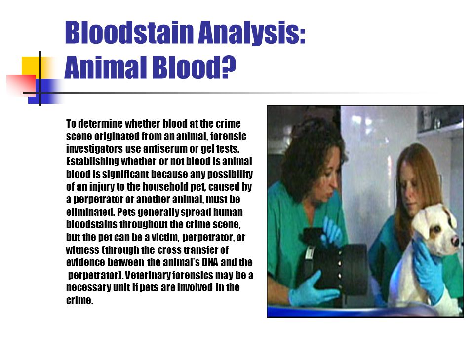 Bloodstain Analysis: Animal Blood