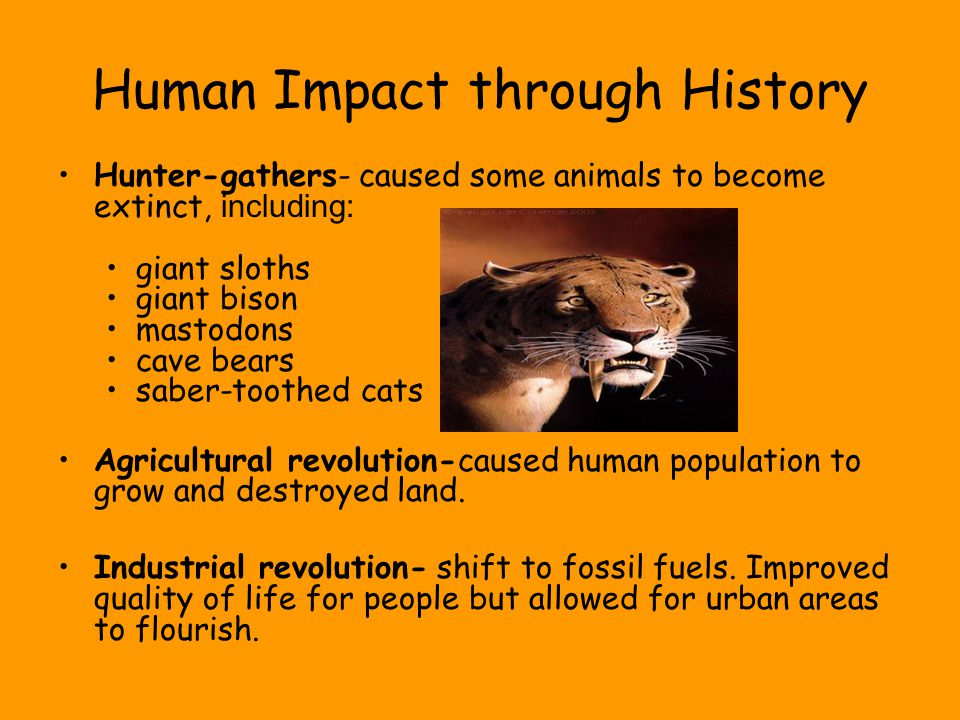 Human Impact through History