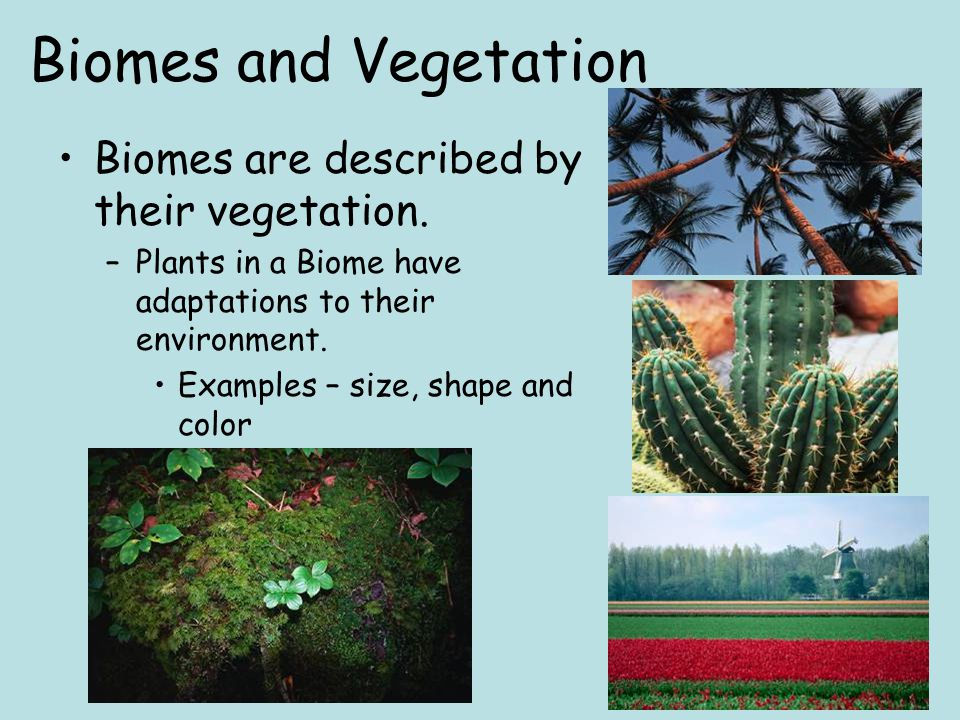 Biomes and Vegetation Biomes are described by their vegetation.
