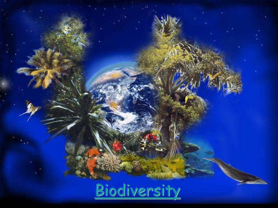 Biodiversity 9